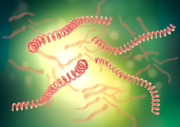 렙토스피라는 렙토스피라증을 일으키는 나선형 박테리아입니다. 3d 일러스트레이션