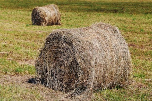 フィールド上の乾燥した丸い干し草のles