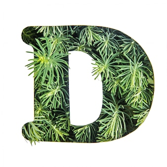 The letter d of the english alphabet from green grass