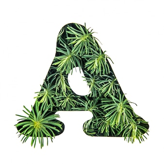The letter a of the english alphabet from green grass