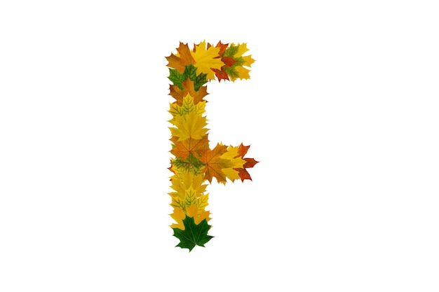 흰색 표면에 고립 된 가을 단풍 잎에서 문자 f