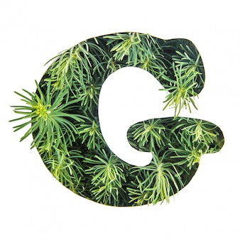The letter g of the english alphabet from green grass