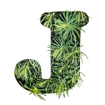 The letter j of the english alphabet from green grass