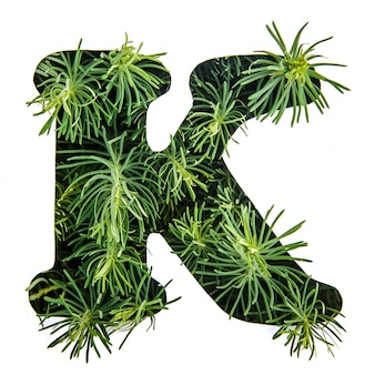 The letter k of the english alphabet from green grass