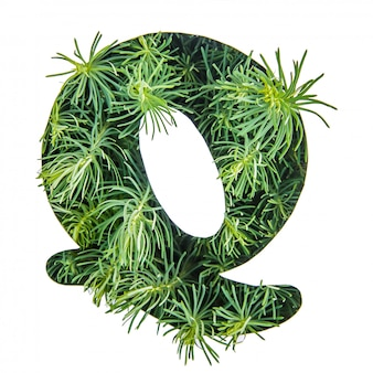 The letter q of the english alphabet from green grass