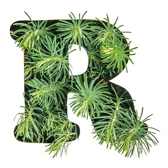 The letter r of the english alphabet from green grass