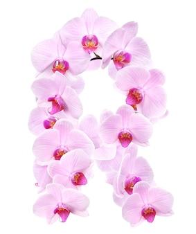蘭の花からの手紙 r。白で隔離