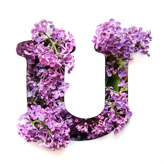 The letter u of the english alphabet from lilac