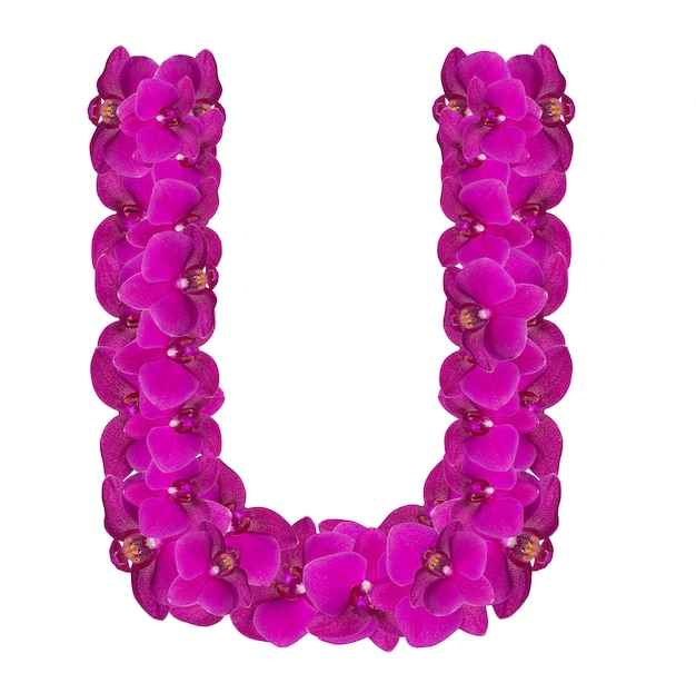 ピンクの花びらで作られたuの文字
