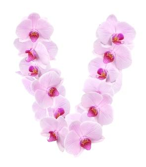蘭の花からの手紙 v。白で隔離
