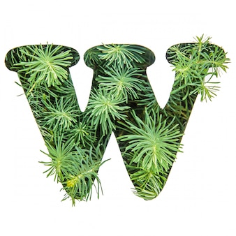 The letter w of the english alphabet from green grass