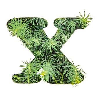 The letter x of the english alphabet from green grass