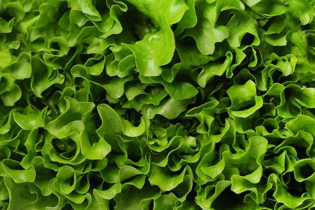 Lettuce closeup texture background