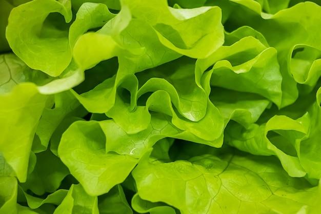 Листья салата крупным планом. полезная зелень на веганской диете.