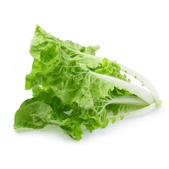 Lettuce leaves isolated on white