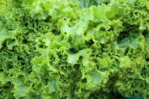 Lettuce in the market
