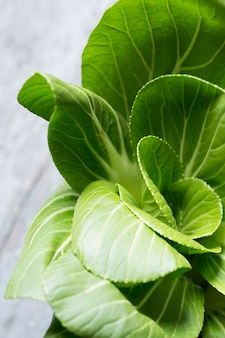 Lettuce plant to eat
