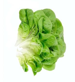 Изолированный салат-латук.