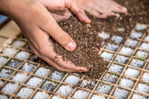 Lettuce seed cultive hand farm