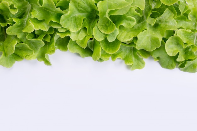 Lettuce  that is placed on a white .