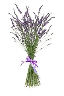 分離されたレバンダー別名レバンデュラバイオレット顕花植物
