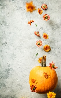 Levitating pumpkin and chrysanthemum, space for text