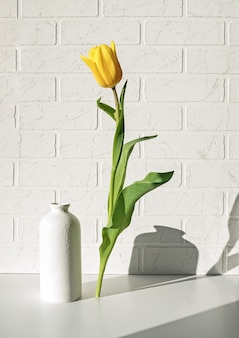 Levitating yellow tulip on a white brick wall and a shadow behind it.