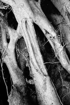 Lianas jungle. banya