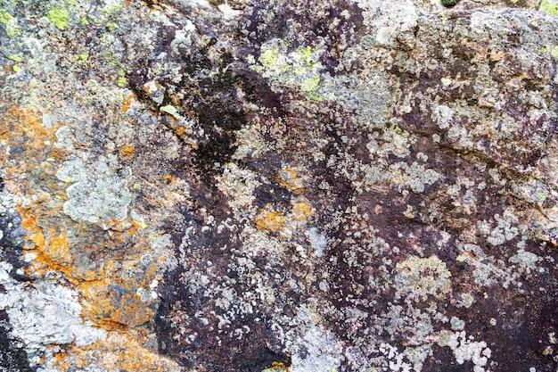 Текстура лишайников и мха на камнях