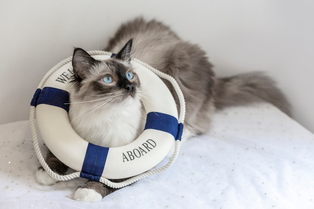 A life buoy was placed on the cat's head and rested on the table