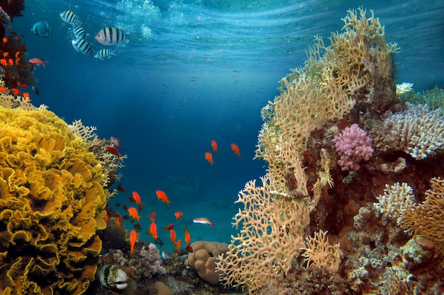 Life-giving sunlight underwater. sun beams shinning underwater on the tropical coral reef. Premium Photo