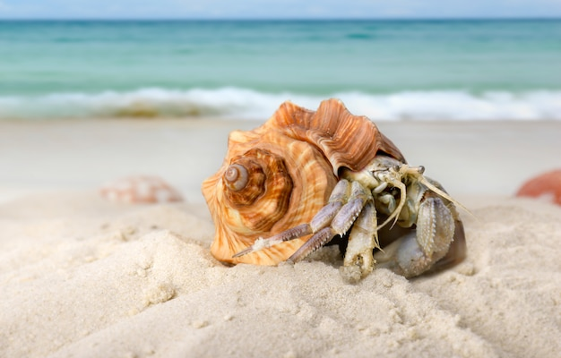 Life hermit crab on the beach