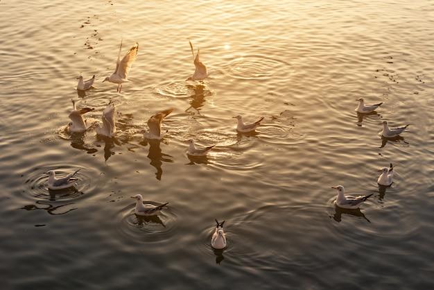 Жизнь чайки стаи на море с солнечным светом вечером в «база отдыха бангпу» санутпракан