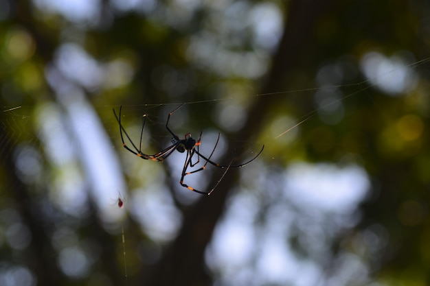 The life of spider, the natural life of insect on its web in the nature