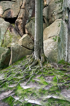 Life of trees among the rocks.