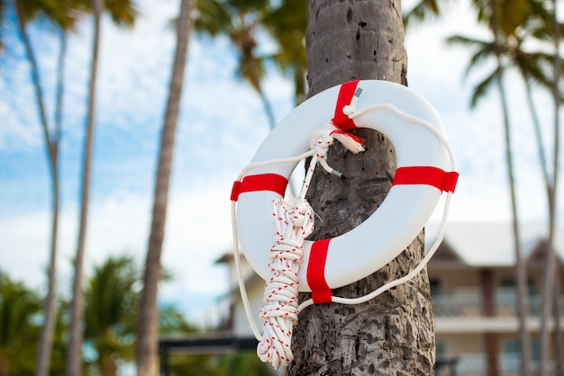 Lifebuoy hanging on a palm tree on the background of the sea
