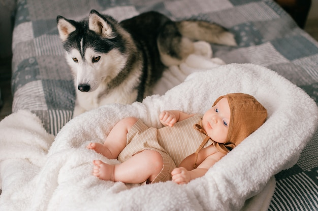 Lifestyle  portrait of newborn baby lying in stroller on bed together with husky. little child and lovely husky dog friendship. adorable funny child sleeping with pet