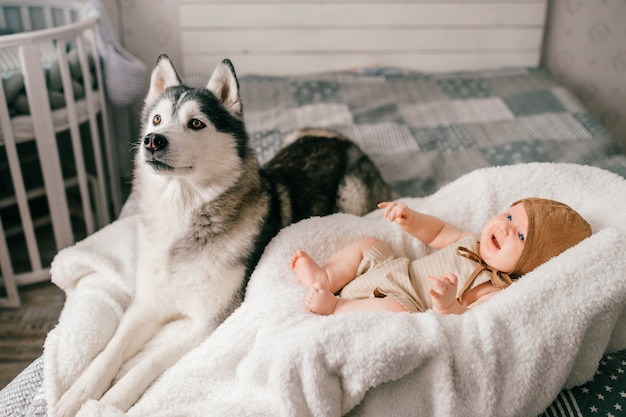 Lifestyle soft focus indoor portrait of newborn baby lying in stroller on bed together with husky puppy at home.