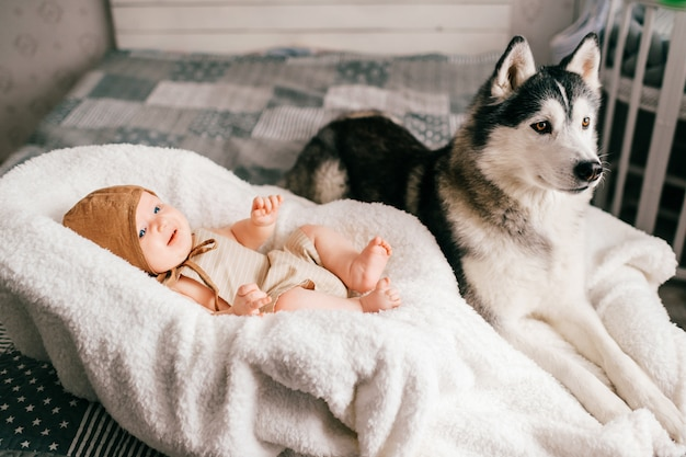 Lifestyle soft focus indoor portrait of newborn baby lying in stroller on bed together with husky puppy little child and lovely husky dog friendship. adorable funny child resting with pet.