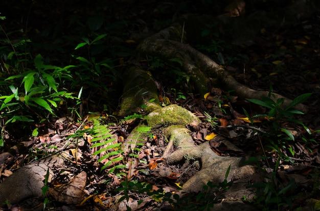 Свет и тени деревьев на полу леса