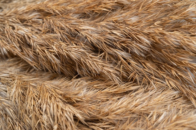 Light background with a common reed copy space beige reeds on white table close up background
