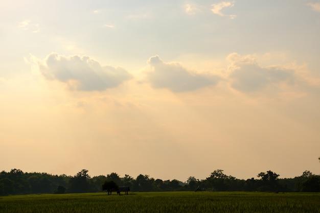 광선 및 하늘에 구름, copyspace 쌀 필드에 오두막