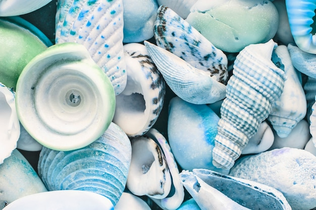 Light blue background of mix seashells, close up, top view