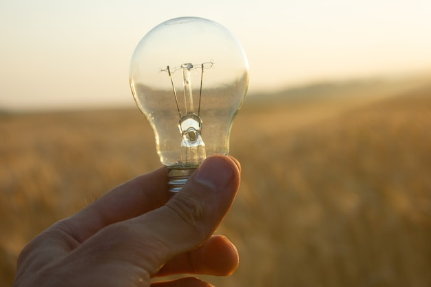 夕暮れ時の麦畑の背景にある電球