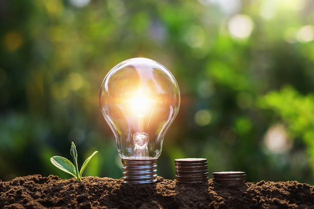 Light bulb with coins and young plant. saving concept