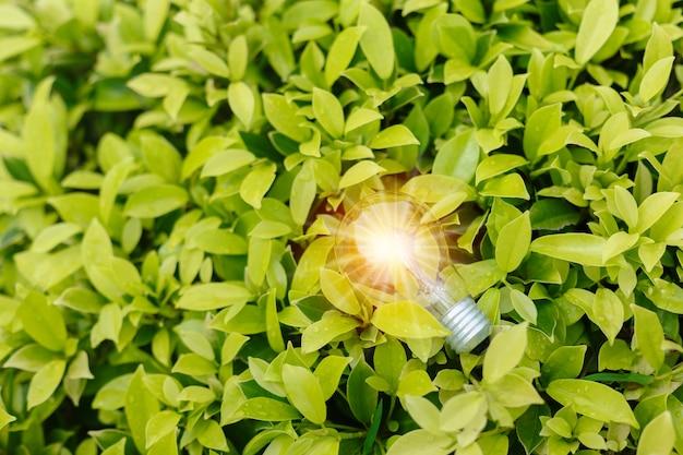 明るいフレアグリーンの自然の背景を持つ電球。エコイノベーション環境と創造的な概念。スペースバナーをコピーします。