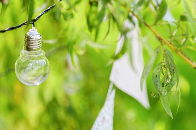 Light bulbs and garland hang on branches