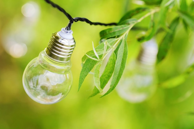 Light bulbs hangs on branches