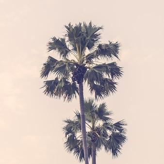 光効果の木の夏の日没