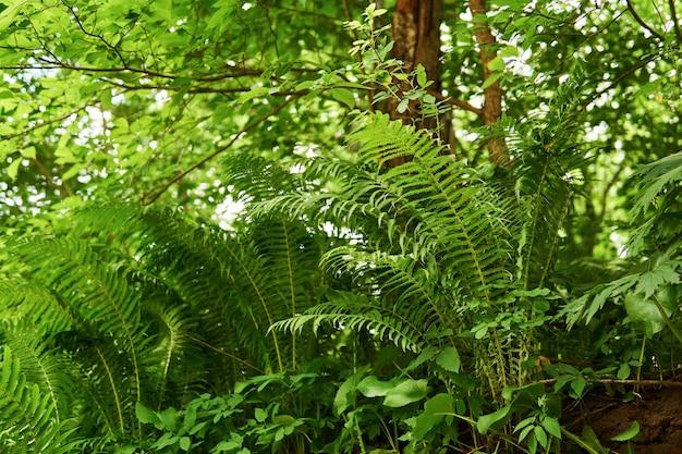Легкий травяной подлесок с папоротниками, вид снизу
